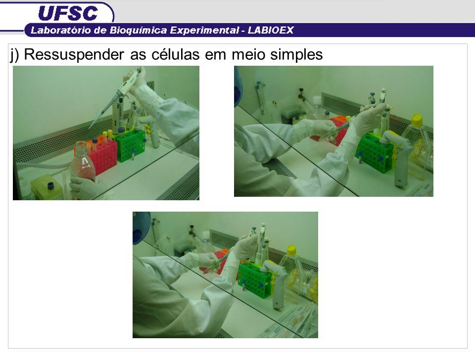 k) Contar as células Nº céls/mL= nº céls contadas/4 x diluição da câmara X diluição amostra Nº céls /mL=nº céls contadas/4 x 10 4 X 10