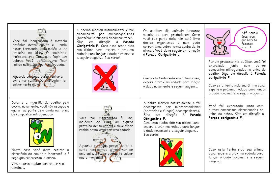 O coelho morreu naturalmente e foi decomposto por microorganismos (bactérias e fungos) decompositores. Siga em direção à Parada Obrigatória F. Caso es