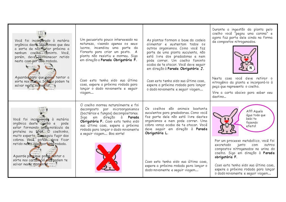 O coelho morreu naturalmente e foi decomposto por microorganismos (bactérias e fungos) decompositores.