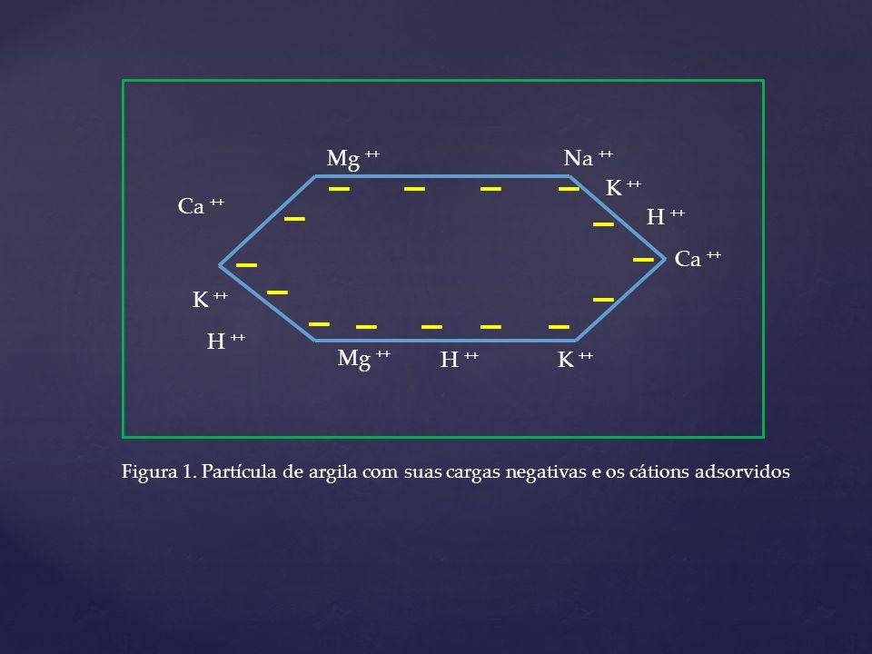 Ca ++ Mg ++ Na ++ K ++ H ++ Ca ++ K ++ H ++ Mg ++ H ++ K ++ Figura 1. Partícula de argila com suas cargas negativas e os cátions adsorvidos
