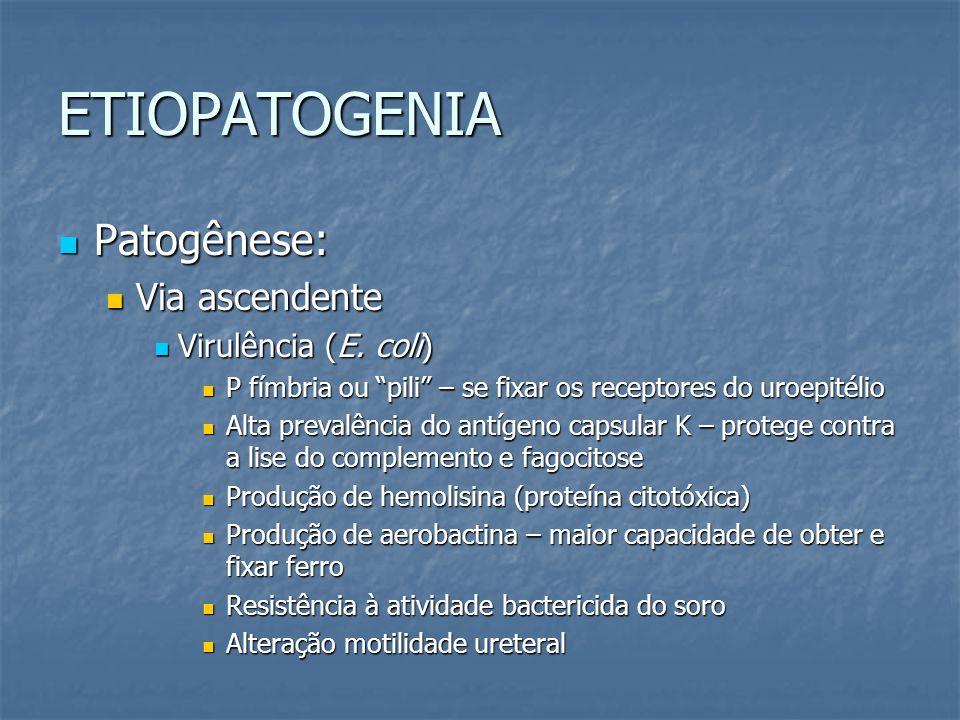 ETIOPATOGENIA Patogênese: Patogênese: Via ascendente Via ascendente Virulência (E. coli) Virulência (E. coli) P fímbria ou pili – se fixar os receptor