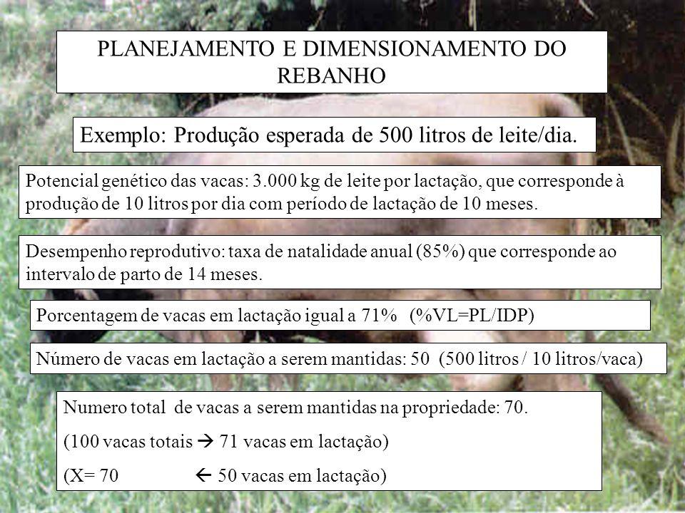 PLANEJAMENTO E DIMENSIONAMENTO DO REBANHO Exemplo: Produção esperada de 500 litros de leite/dia. Potencial genético das vacas: 3.000 kg de leite por l
