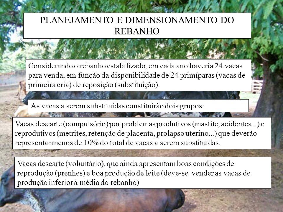 PLANEJAMENTO E DIMENSIONAMENTO DO REBANHO Considerando o rebanho estabilizado, em cada ano haveria 24 vacas para venda, em função da disponibilidade d