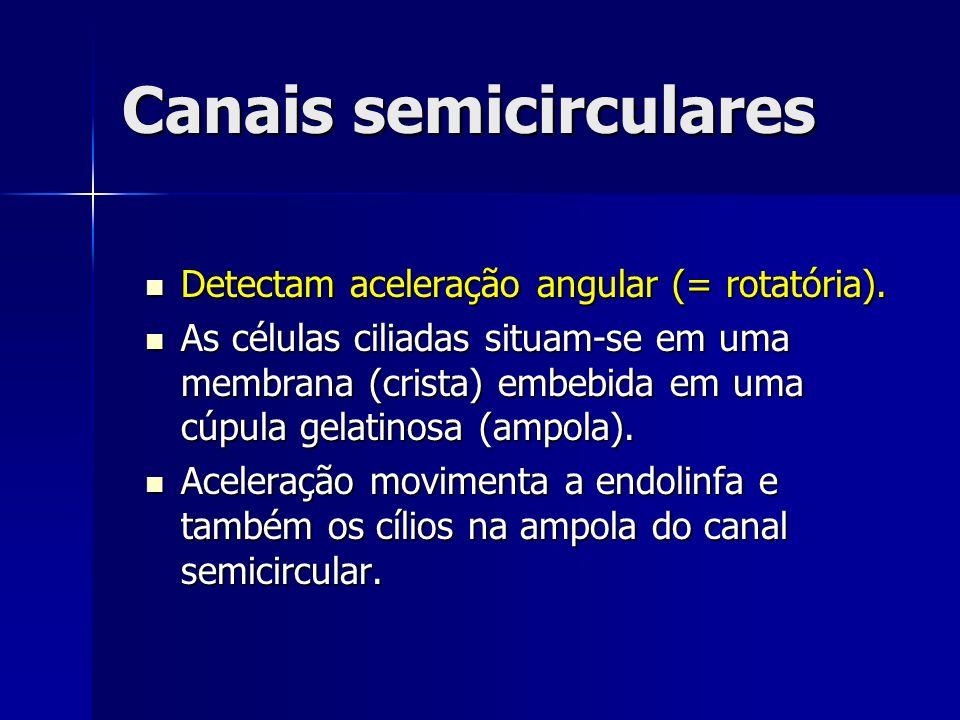 Canais semicirculares Detectam aceleração angular (= rotatória). Detectam aceleração angular (= rotatória). As células ciliadas situam-se em uma membr