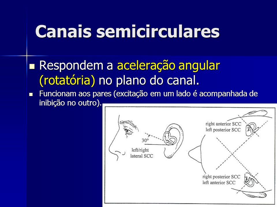 Canais semicirculares Respondem a aceleração angular (rotatória) no plano do canal. Respondem a aceleração angular (rotatória) no plano do canal. Func
