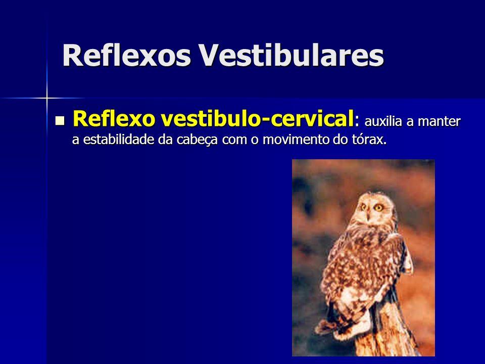Reflexos Vestibulares Reflexo vestibulo-cervical : auxilia a manter a estabilidade da cabeça com o movimento do tórax. Reflexo vestibulo-cervical : au