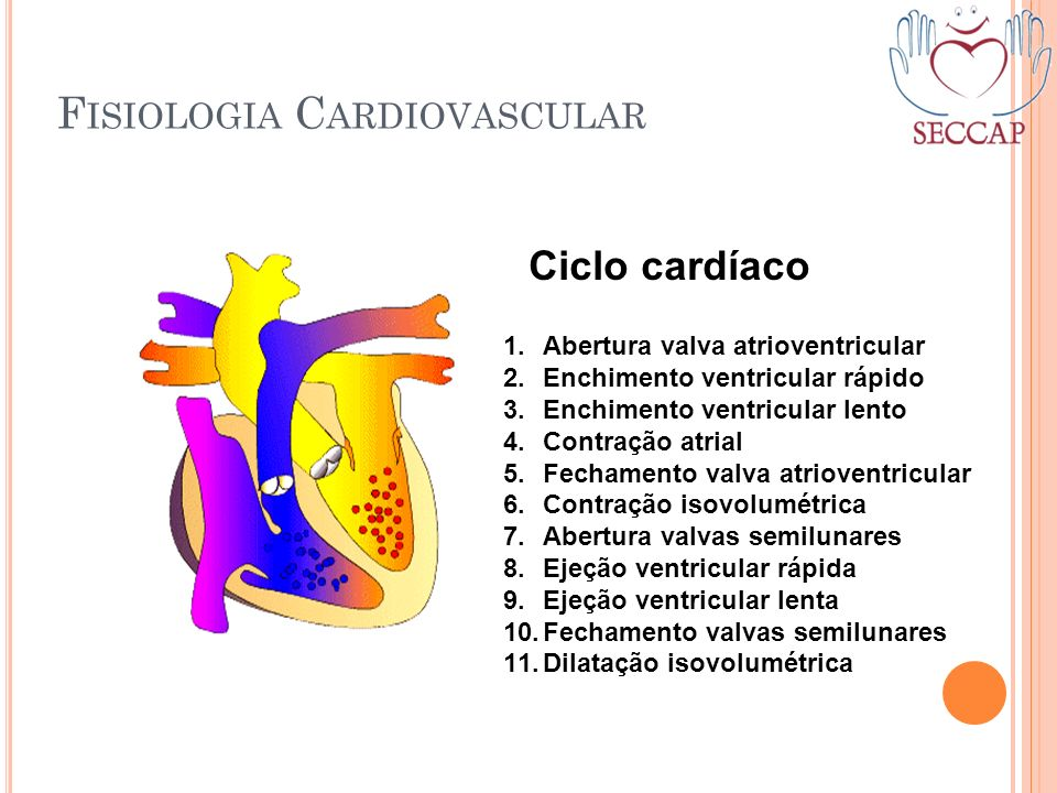 F ISIOLOGIA C ARDIOVASCULAR Ciclo cardíaco 1.Abertura valva atrioventricular 2.Enchimento ventricular rápido 3.Enchimento ventricular lento 4.Contraçã
