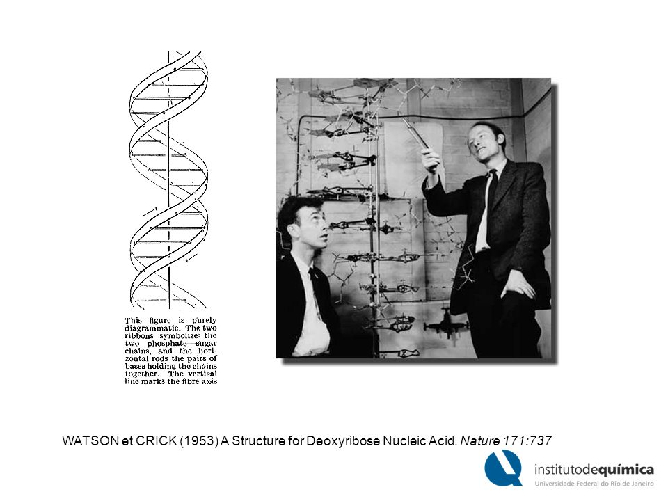 WATSON et CRICK (1953) A Structure for Deoxyribose Nucleic Acid. Nature 171:737