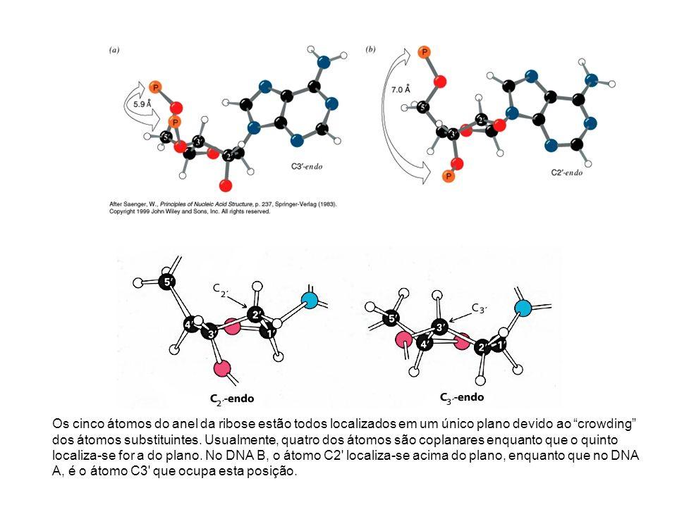 Os cinco átomos do anel da ribose estão todos localizados em um único plano devido ao crowding dos átomos substituintes. Usualmente, quatro dos átomos