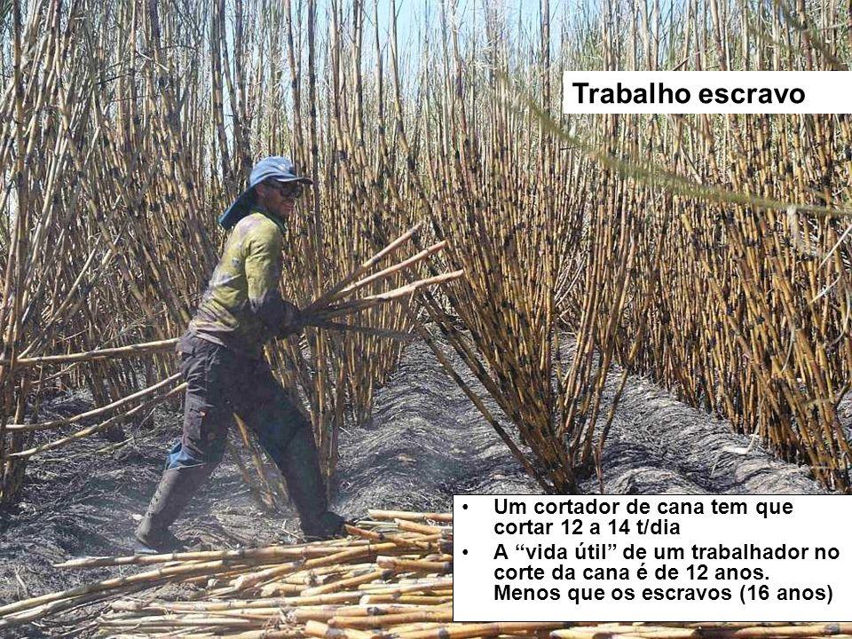 Um cortador de cana tem que cortar 12 a 14 t/dia A vida útil de um trabalhador no corte da cana é de 12 anos. Menos que os escravos (16 anos) Trabalho