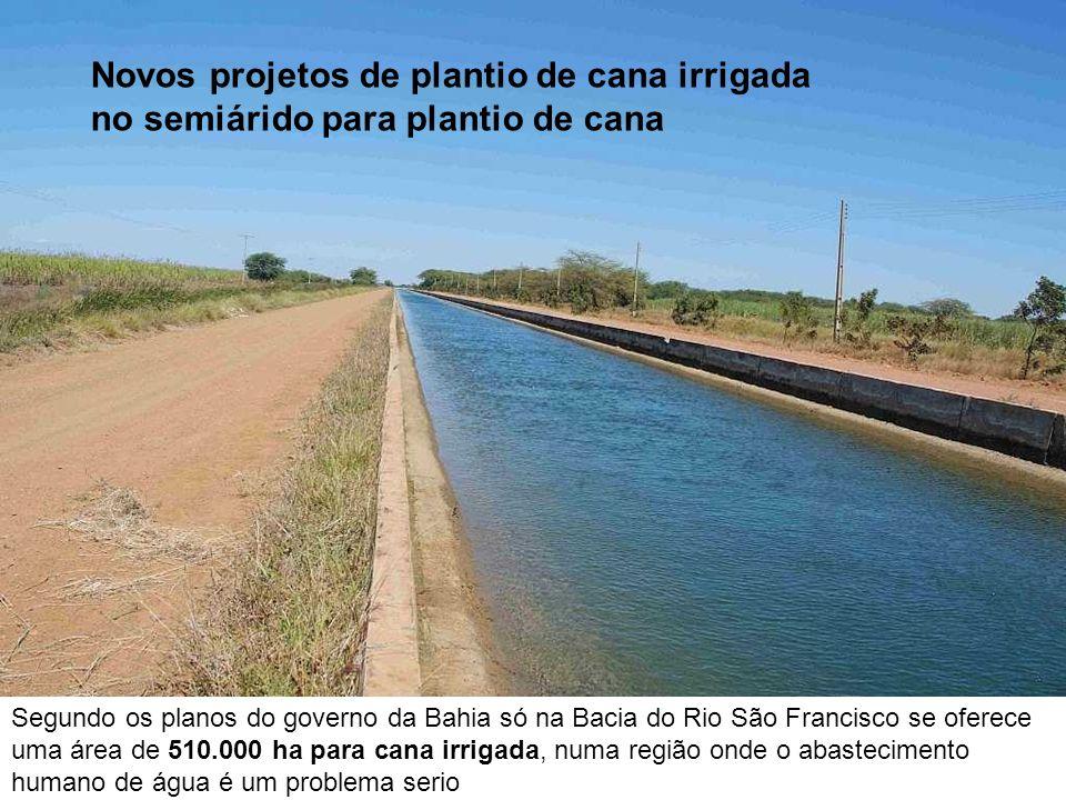 Novos projetos de plantio de cana irrigada no semiárido para plantio de cana Segundo os planos do governo da Bahia só na Bacia do Rio São Francisco se