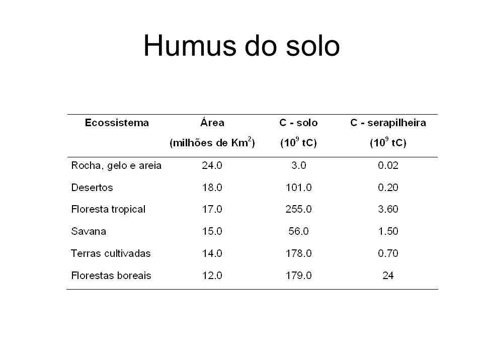 Humus do solo