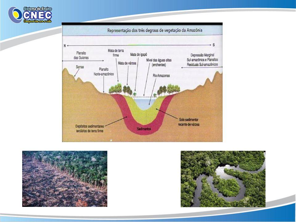 Cerrado O Cerrado é o segundo maior bioma da América do Sul e cobre 22% do território brasileiro.