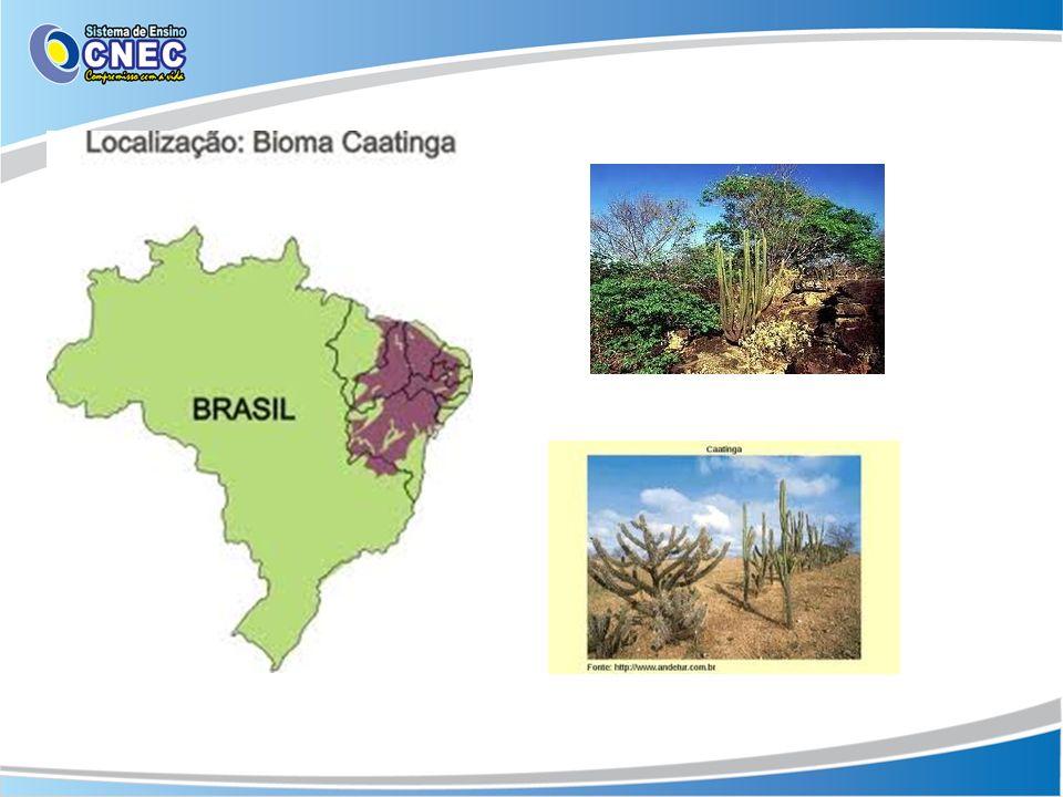 Pampa O bioma pampa está presente somente no Rio Grande do Sul, ocupando 63% do território do Estado.