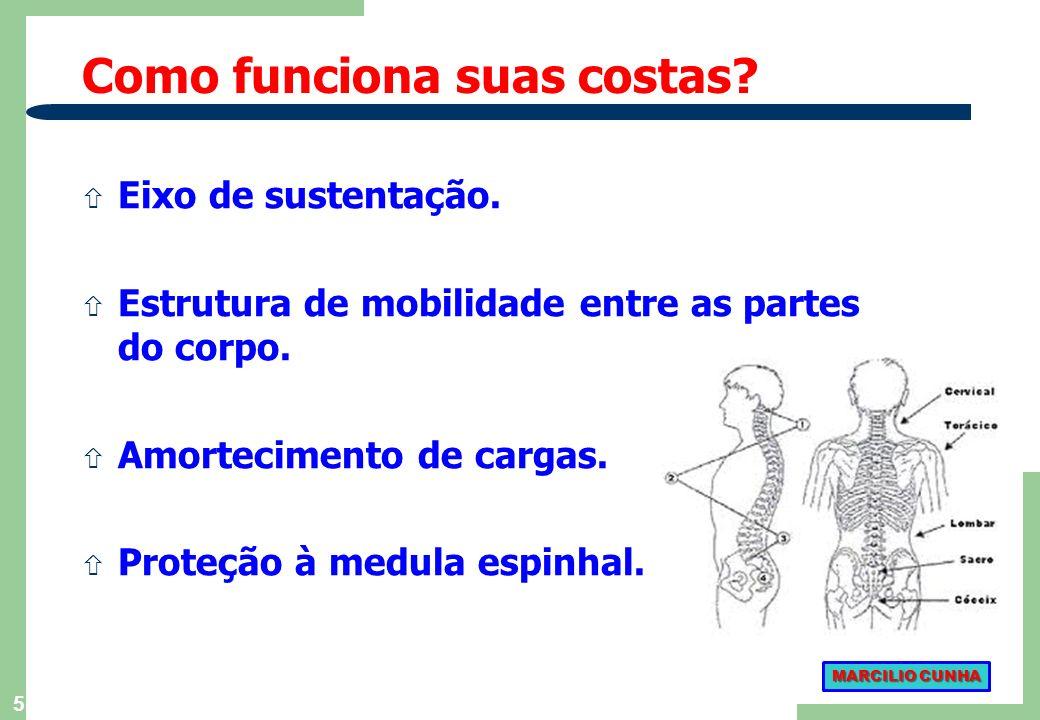 5 ñ Eixo de sustentação.ñ Estrutura de mobilidade entre as partes do corpo.