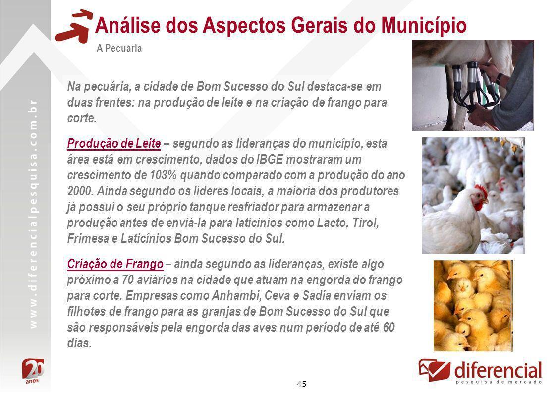 45 Análise dos Aspectos Gerais do Município A Pecuária Na pecuária, a cidade de Bom Sucesso do Sul destaca-se em duas frentes: na produção de leite e