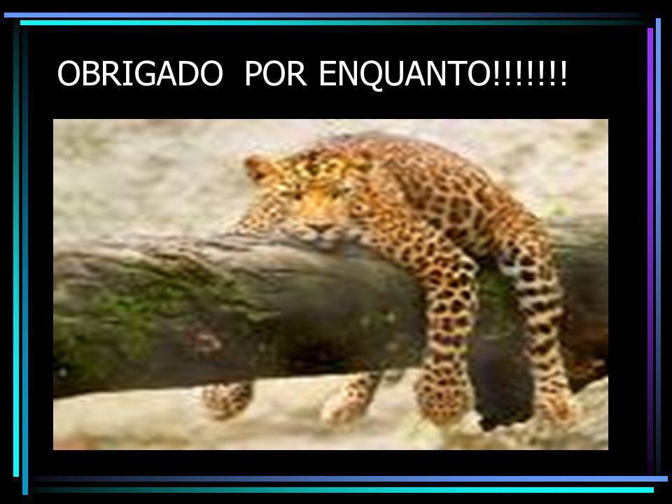 OBRIGADO POR ENQUANTO!!!!!!!