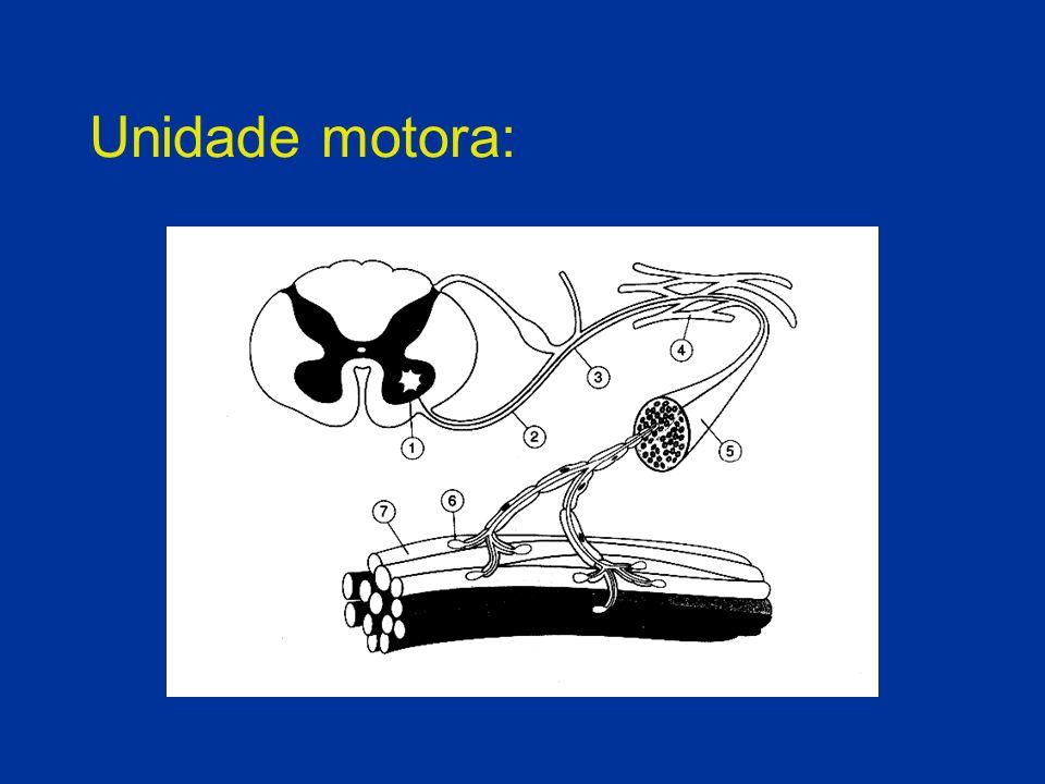 Esclerose Lateral Amiotrófica: Tratamento: Tratamento multidisciplinar: - psiquiatra - gastroenterologista - pneumologista - fisioterapeuta - fonoaudióloga - terapeuta ocupacional