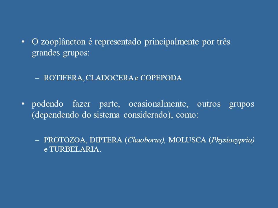 O zooplâncton é representado principalmente por três grandes grupos: –ROTIFERA, CLADOCERA e COPEPODA podendo fazer parte, ocasionalmente, outros grupo