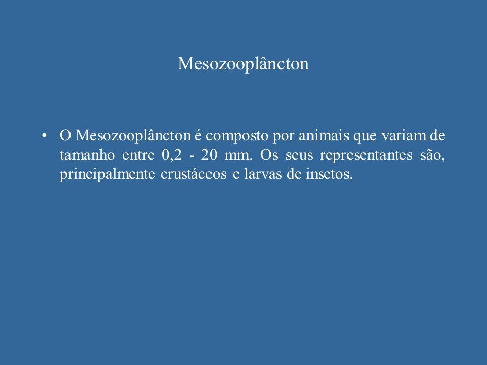 Mesozooplâncton O Mesozooplâncton é composto por animais que variam de tamanho entre 0,2 - 20 mm. Os seus representantes são, principalmente crustáceo
