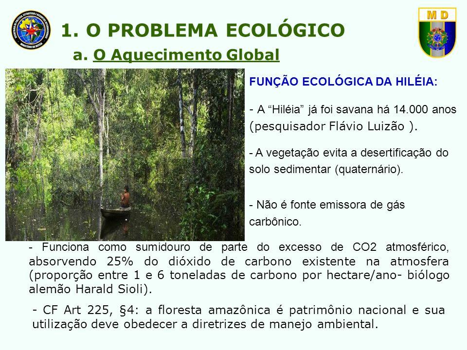 FUNÇÃO ECOLÓGICA DA HILÉIA: - A Hiléia já foi savana há 14.000 anos (pesquisador Flávio Luizão ). - A vegetação evita a desertificação do solo sedimen