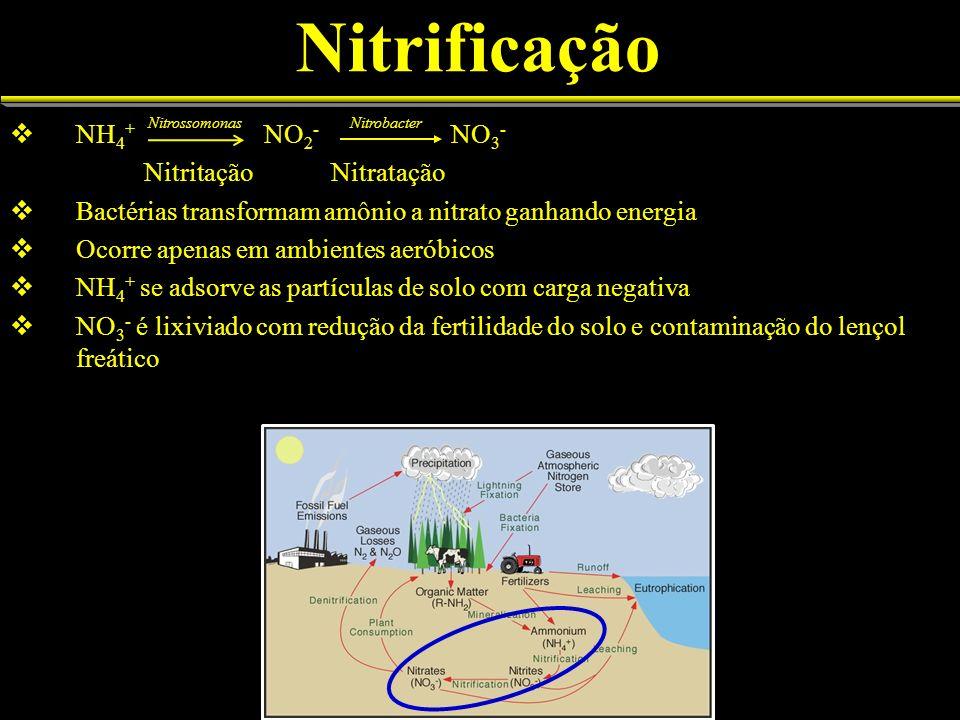 Nitrificação NH 4 + NO 2 - NO 3 - Nitritação Nitratação Bactérias transformam amônio a nitrato ganhando energia Ocorre apenas em ambientes aeróbicos N
