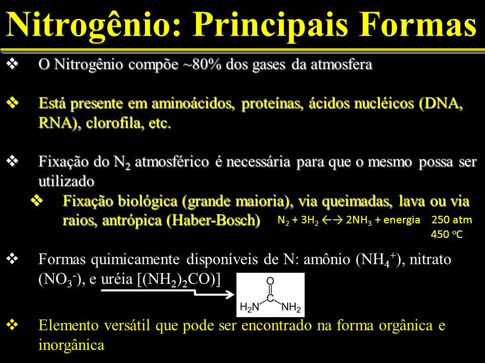 Nitrogênio: Principais Formas O Nitrogênio compõe ~80% dos gases da atmosfera O Nitrogênio compõe ~80% dos gases da atmosfera Está presente em aminoác