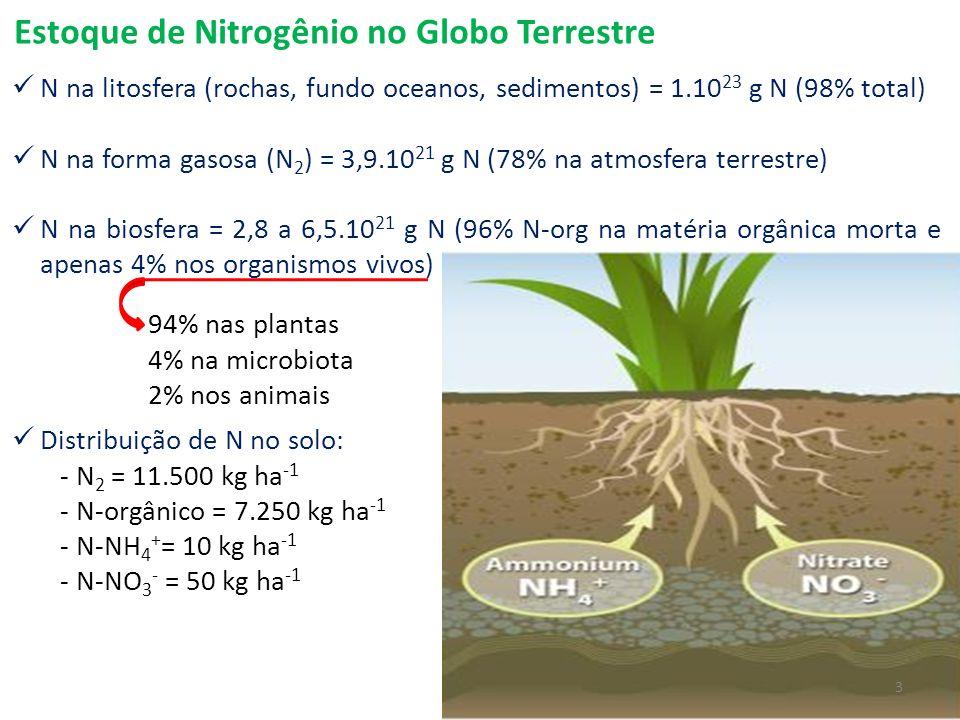 Estoque de Nitrogênio no Globo Terrestre N na litosfera (rochas, fundo oceanos, sedimentos) = 1.10 23 g N (98% total) N na forma gasosa (N 2 ) = 3,9.1