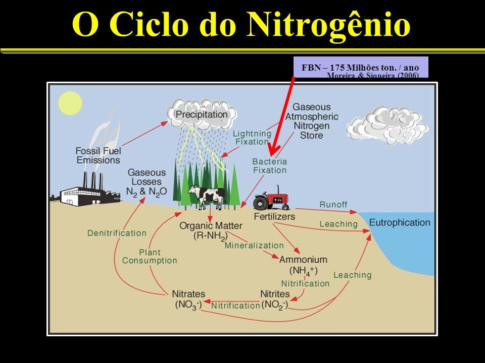 O Ciclo do Nitrogênio 4 FBN – 175 Milhões ton. / ano Moreira & Siqueira (2006)