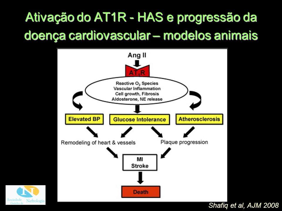 Ativação do AT1R - HAS e progressão da doença cardiovascular – modelos animais Shafiq et al, AJM 2008