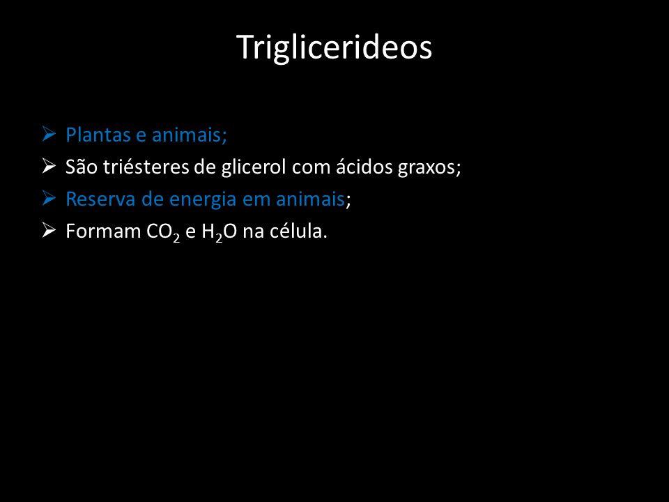 Triglicerideos Plantas e animais; São triésteres de glicerol com ácidos graxos; Reserva de energia em animais; Formam CO 2 e H 2 O na célula.