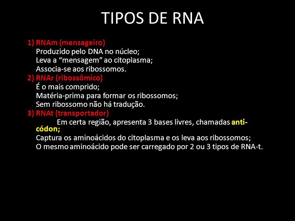 TIPOS DE RNA 1) RNAm (mensageiro) Produzido pelo DNA no núcleo; Leva a mensagem ao citoplasma; Associa-se aos ribossomos.