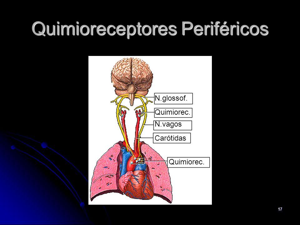 17 Quimioreceptores Periféricos N.glossof. Quimiorec. N.vagos Carótidas Quimiorec.
