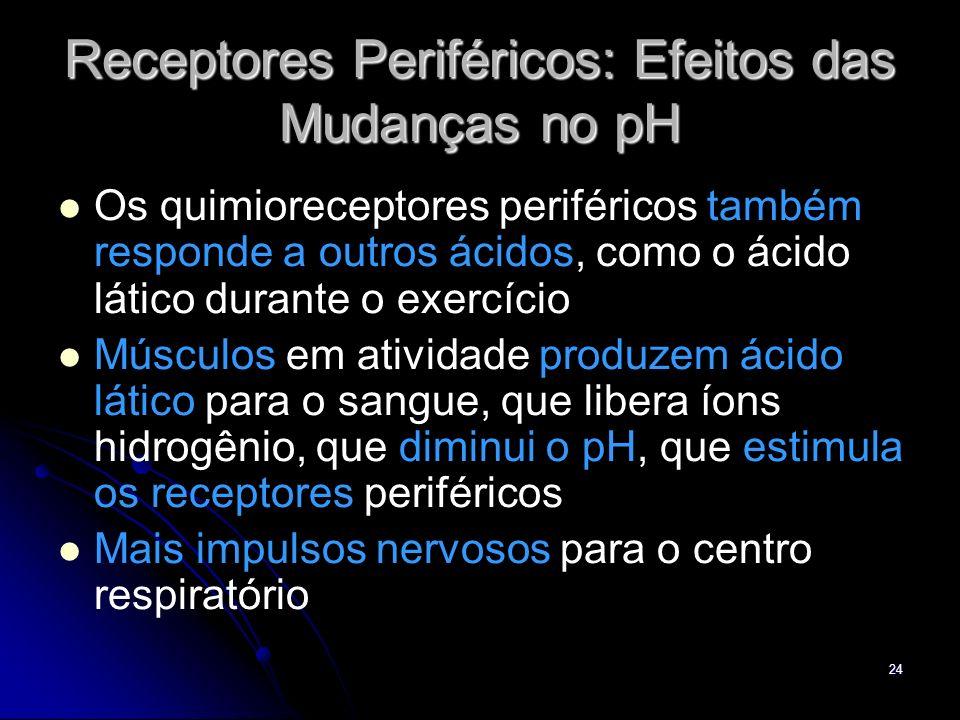 24 Receptores Periféricos: Efeitos das Mudanças no pH Os quimioreceptores periféricos também responde a outros ácidos, como o ácido lático durante o e