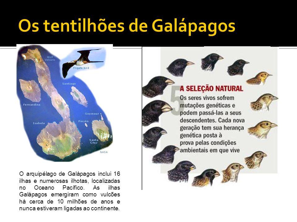 O arquipélago de Galápagos inclui 16 ilhas e numerosas ilhotas, localizadas no Oceano Pacífico. As ilhas Galápagos emergiram como vulcões há cerca de