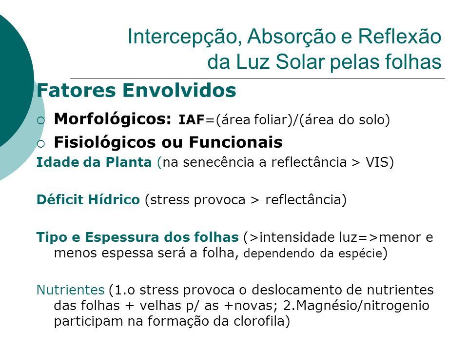 Intercepção, Absorção e Reflexão da Luz Solar pelas folhas Fatores Envolvidos Morfológicos: IAF=(área foliar)/(área do solo) Fisiológicos ou Funcionai