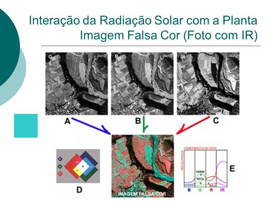 Interação da Radiação Solar com a Planta Imagem Falsa Cor (Foto com IR)