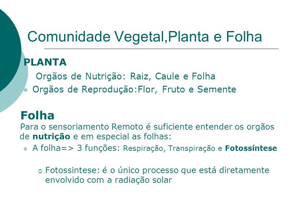 Comunidade Vegetal,Planta e Folha PLANTA Orgãos de Nutrição: Raiz, Caule e Folha Orgãos de Reprodução:Flor, Fruto e Semente Folha Para o sensoriamento