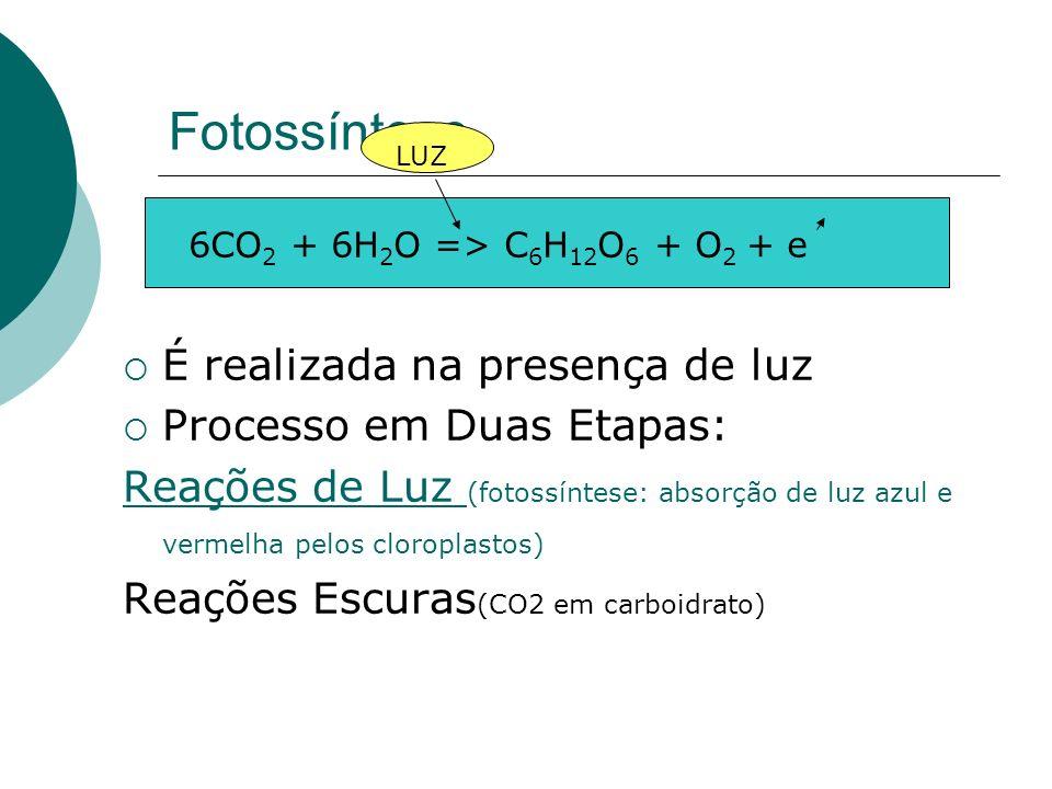 Fotossíntese É realizada na presença de luz Processo em Duas Etapas: Reações de Luz (fotossíntese: absorção de luz azul e vermelha pelos cloroplastos)