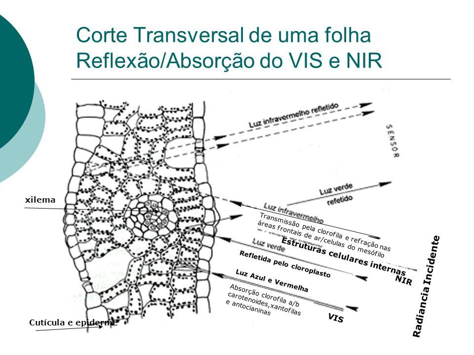 Corte Transversal de uma folha Reflexão/Absorção do VIS e NIR Luz Azul e Vermelha xilema Cutícula e epiderme Estruturas celulares internas Absorção cl