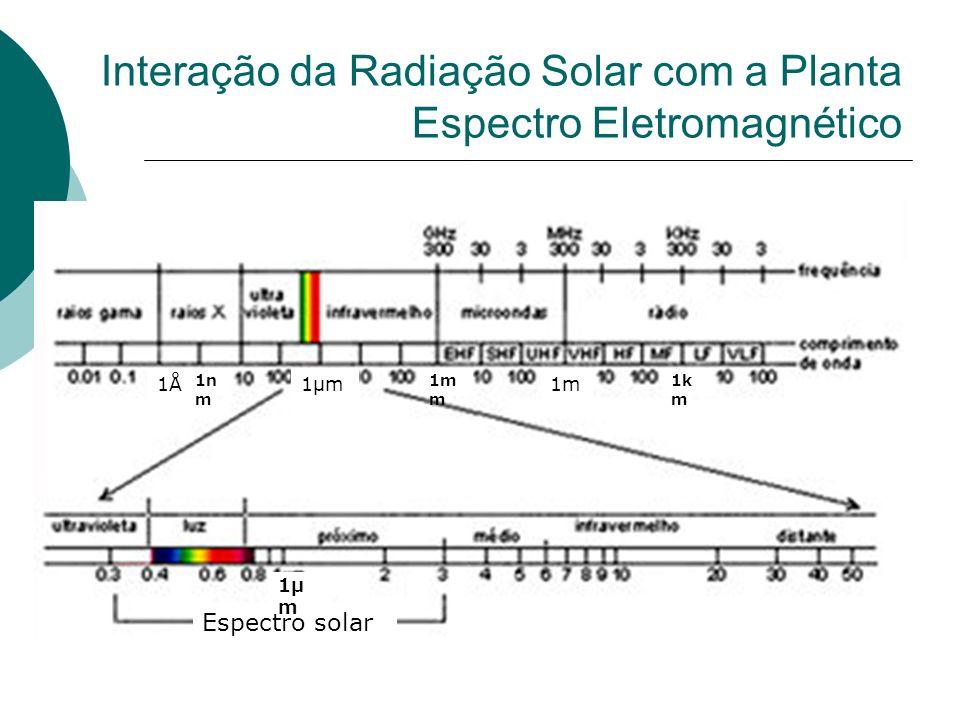 Interação da Radiação Solar com a Planta Espectro Eletromagnético 1Å1µm 1n m 1m m 1m 1k m Espectro solar 1µ m