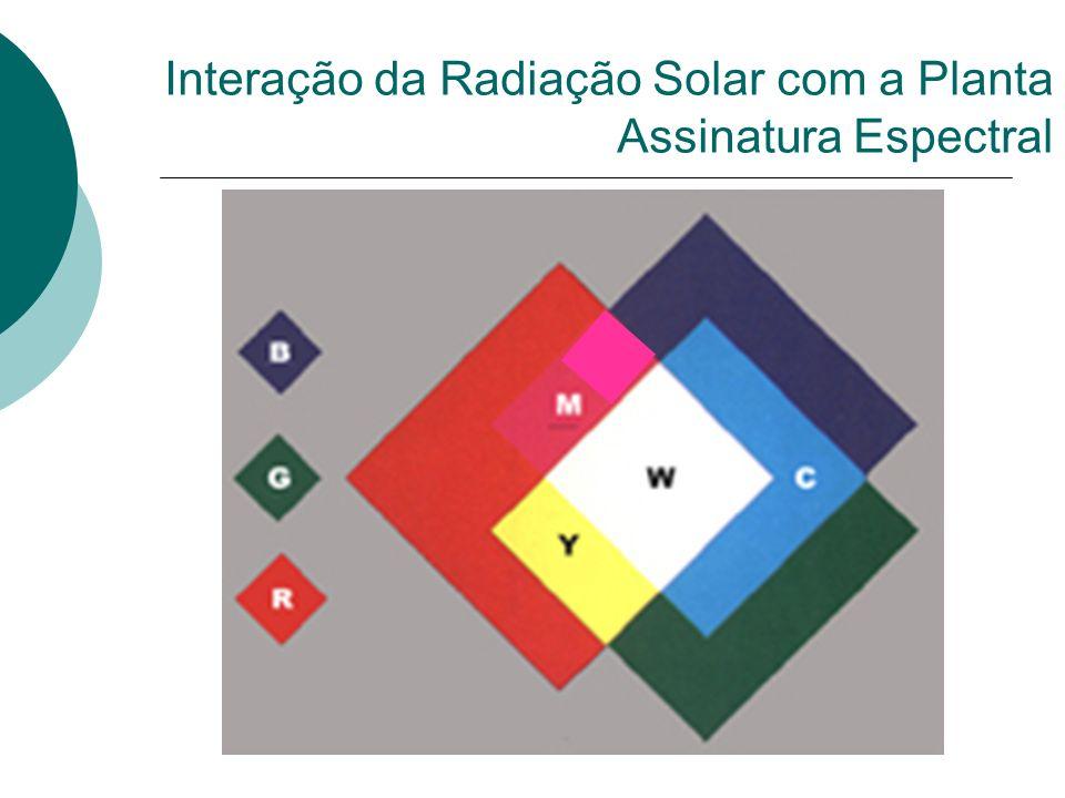Referências Bibliográficas Moreira, Maurício Alves.Fundamentos do sensoriamento remoto e metodologias de aplicação.