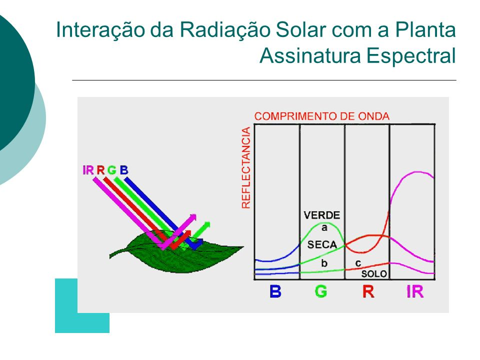 Resposta Espectral uma folha Reflexão/Absorção do VIS e NIR Absorção de Água