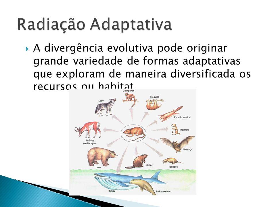 A divergência evolutiva pode originar grande variedade de formas adaptativas que exploram de maneira diversificada os recursos ou habitat.