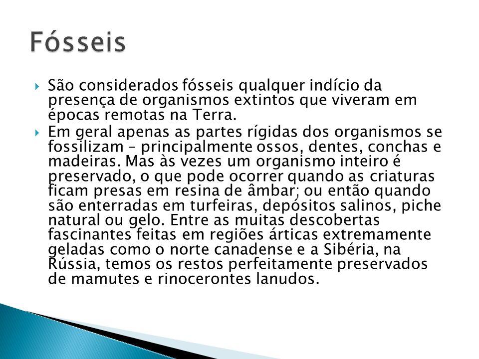 São considerados fósseis qualquer indício da presença de organismos extintos que viveram em épocas remotas na Terra. Em geral apenas as partes rígidas