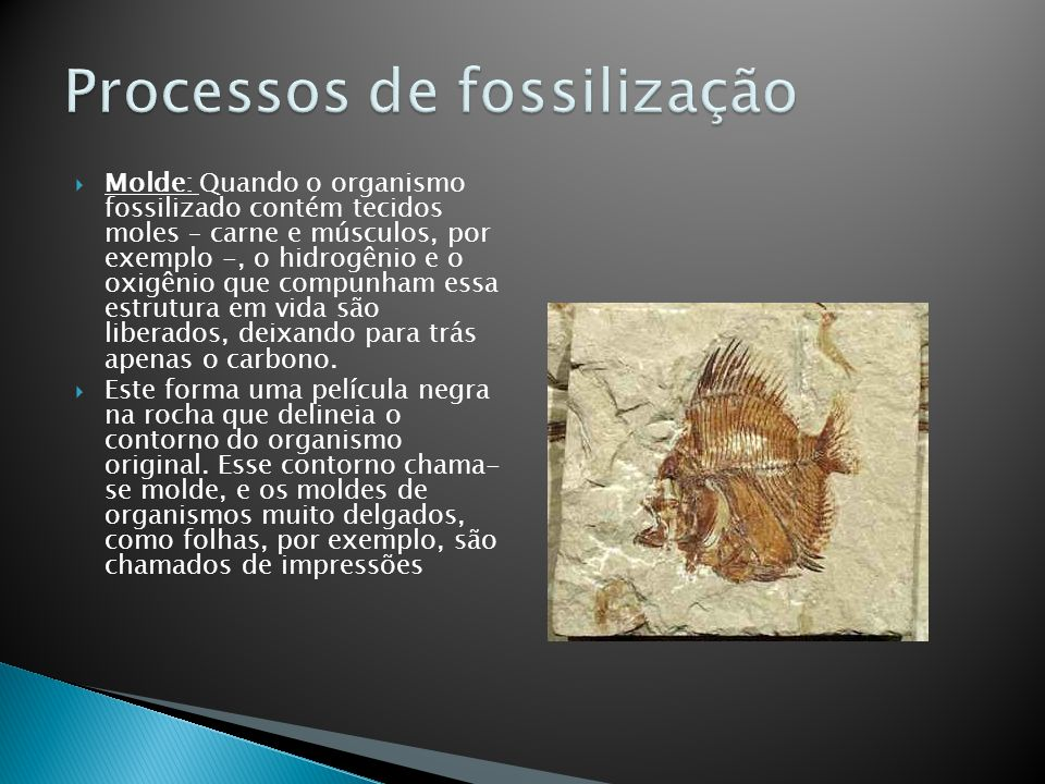 Molde: Quando o organismo fossilizado contém tecidos moles – carne e músculos, por exemplo -, o hidrogênio e o oxigênio que compunham essa estrutura e