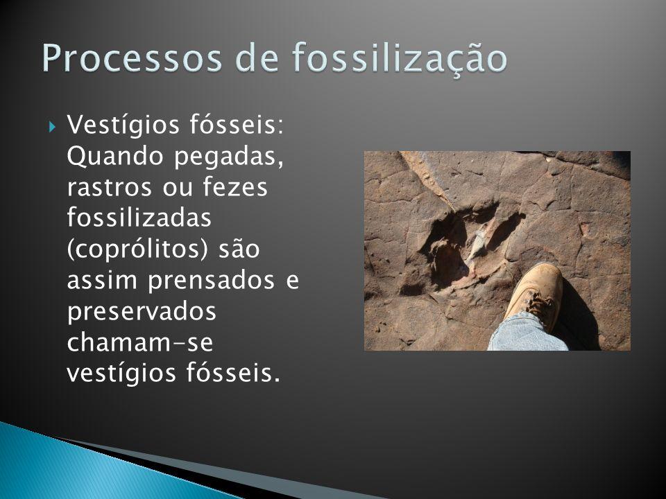Vestígios fósseis: Quando pegadas, rastros ou fezes fossilizadas (coprólitos) são assim prensados e preservados chamam-se vestígios fósseis.
