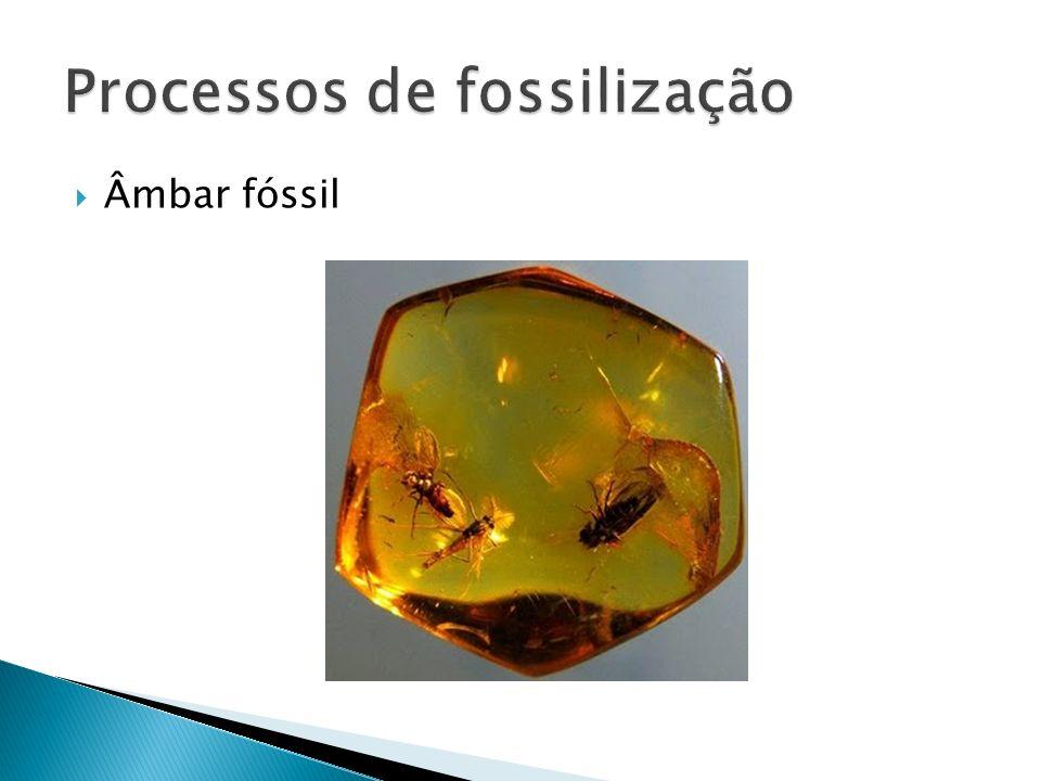 Âmbar fóssil