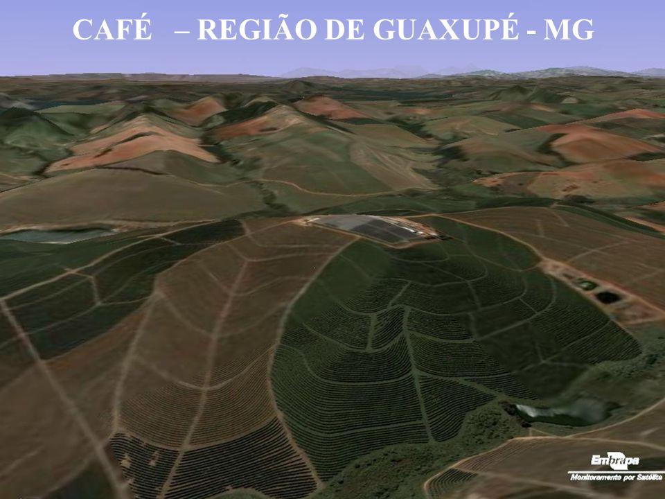 CAFÉ – REGIÃO DE GUAXUPÉ - MG