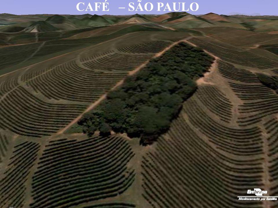 CAFÉ – SÃO PAULO